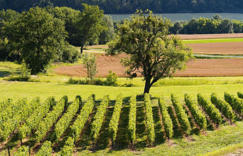 Randonnée VAE Terroir et vignobles de Seyssel